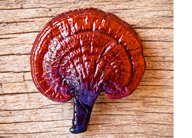 ganoderma photo